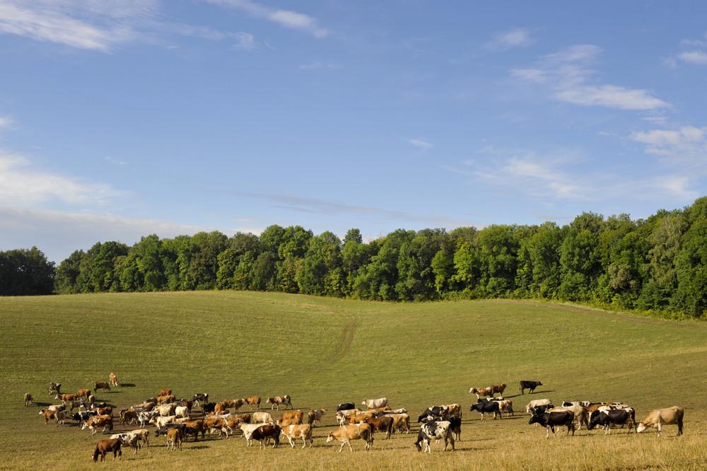 «НІБУЛОН» покращує ефективність тваринницької галузі