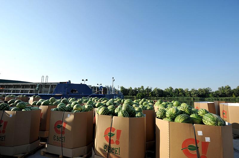 Херсонські кавуни знову прямують до Києва