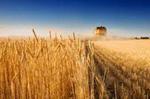 Украина - одна из самых привлекательных стран для покупки земли