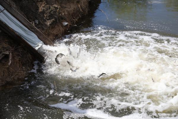 Пресреліз: Екологічний активізм компанії «НІБУЛОН»: у с. Тернівка відбудеться черговий етап зариблення Дніпра та озеленення місцевості