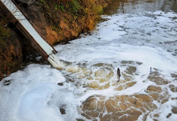 Голова спецкомісії із зариблення: «Компанія «НІБУЛОН» вносить один із найбільших вкладів до відновлення водойм Запорізької області»