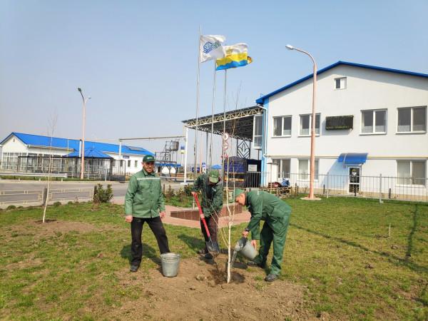 Всеукраїнське весняне озеленення: компанія «НІБУЛОН» реалізувала чергову екологічну ініціативу