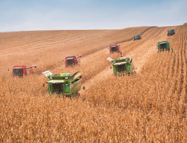 «НІБУЛОН» завершує збирання пізніх зернових культур