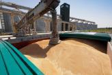 Філія «Новоодеська» відвантажила на водний транспорт 150 тисяч тонн збіжжя у 2016 році